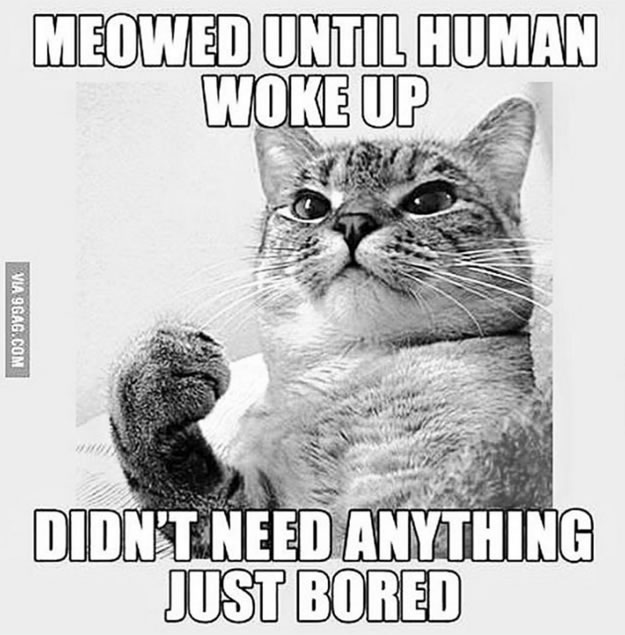 Meowed until human woke up. Didn't need anything. Just bored.