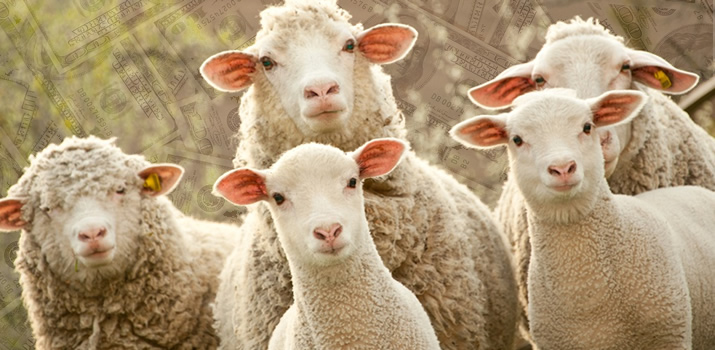 Money Mistake #2: Follow a Herd Mentality