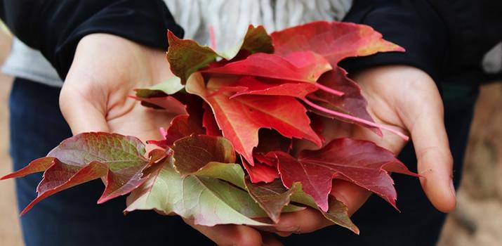 My Favorite Fall Things