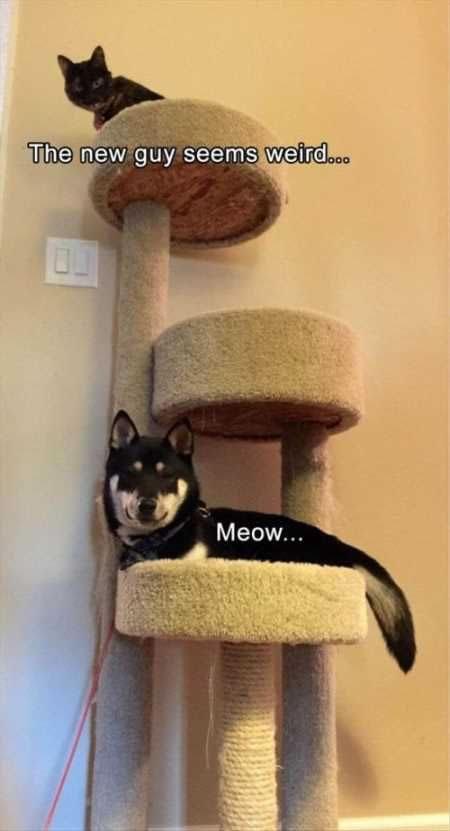 animal meme