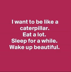 I want to be like a caterpillar. Eat a lot. Sleep for a while. Wake up beautiful.